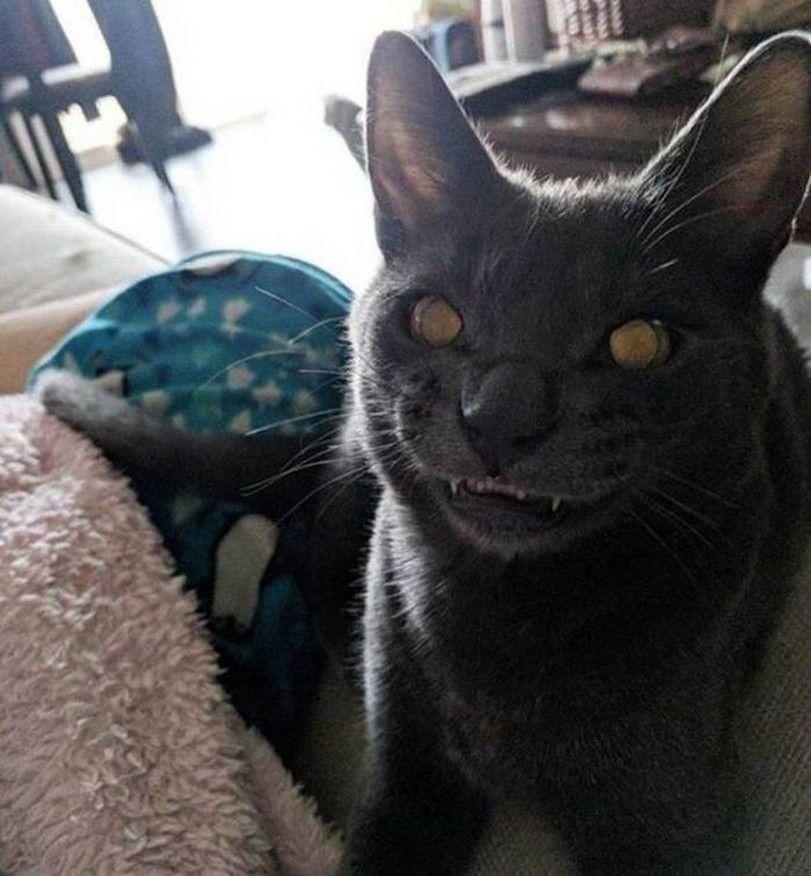 котэ,прикольные картинки с кошками,погладь кота сука | Joy ...