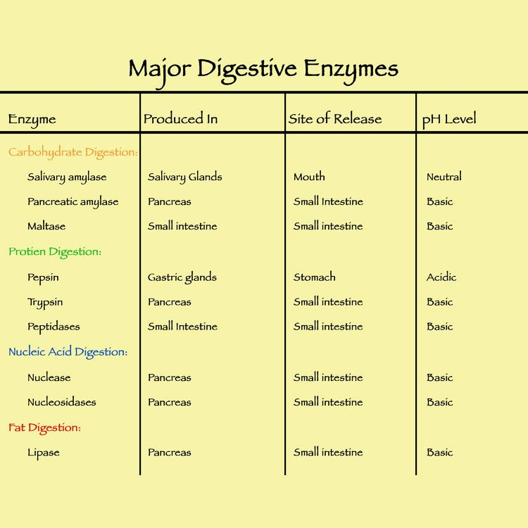 Enzyme Nutrition Pharmacistben Com Human Digestive System Digestive Enzymes Carbohydrates Biology