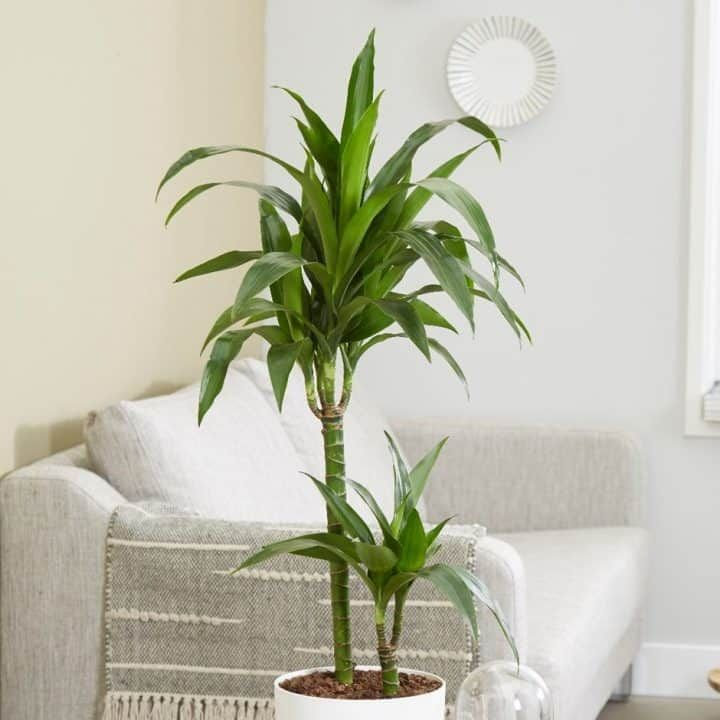40 Best Indoor Plants That Don T Need Sunlight Tall 400 x 300