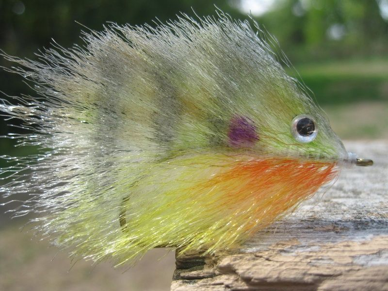 Baby Bluegill - Indianapolis Fly Casters