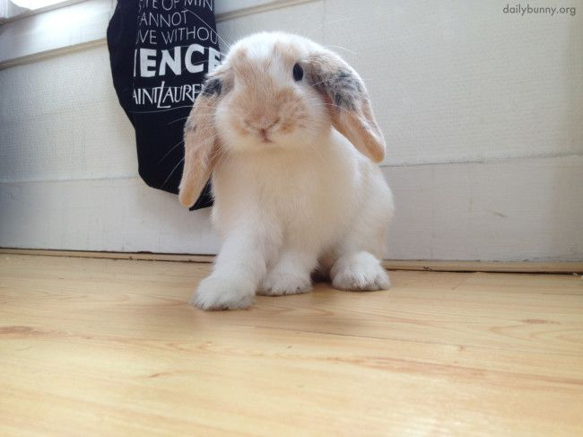 Curious Bunny Wants to See What's Behind This Cushion