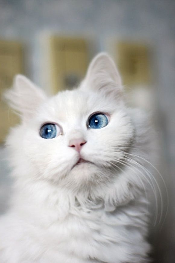 ♥FF♥ 292 #blue eyed beauty
