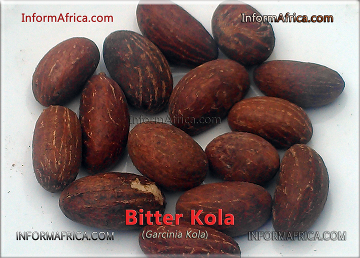 Health Benefits of Bitter Kola (Garcinia Kola) helps treat malaria