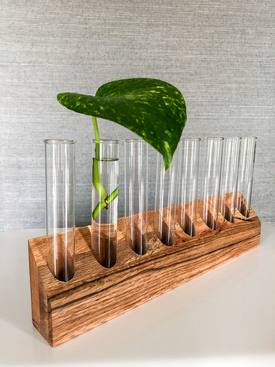 DIY Plant Propagation Station is part of Diy plants, Propagating plants, Diy plant stand, Inside plants, Plants, Indoor plants - Make a DIY plant propagation station out of scrap wood and test tubes  Easily change out the water and the clear glass allows you to monitor root growth!