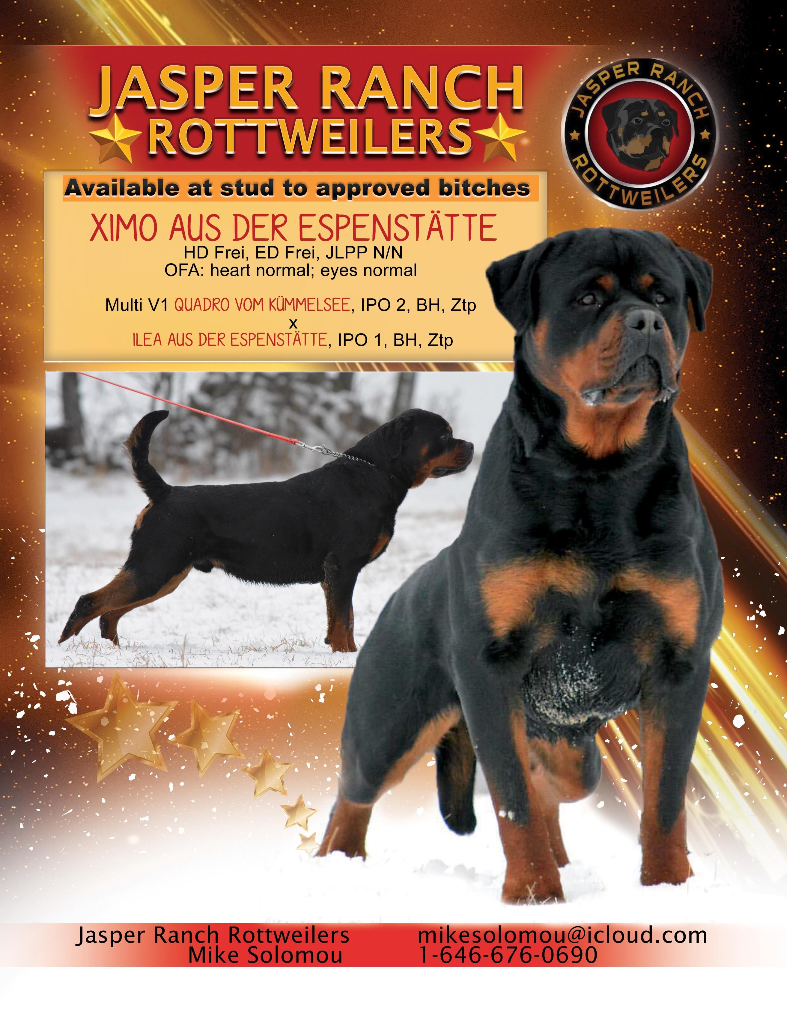 Jasper Ranch Rottweilers Mike Solomou New York Mikesolomou Icloud