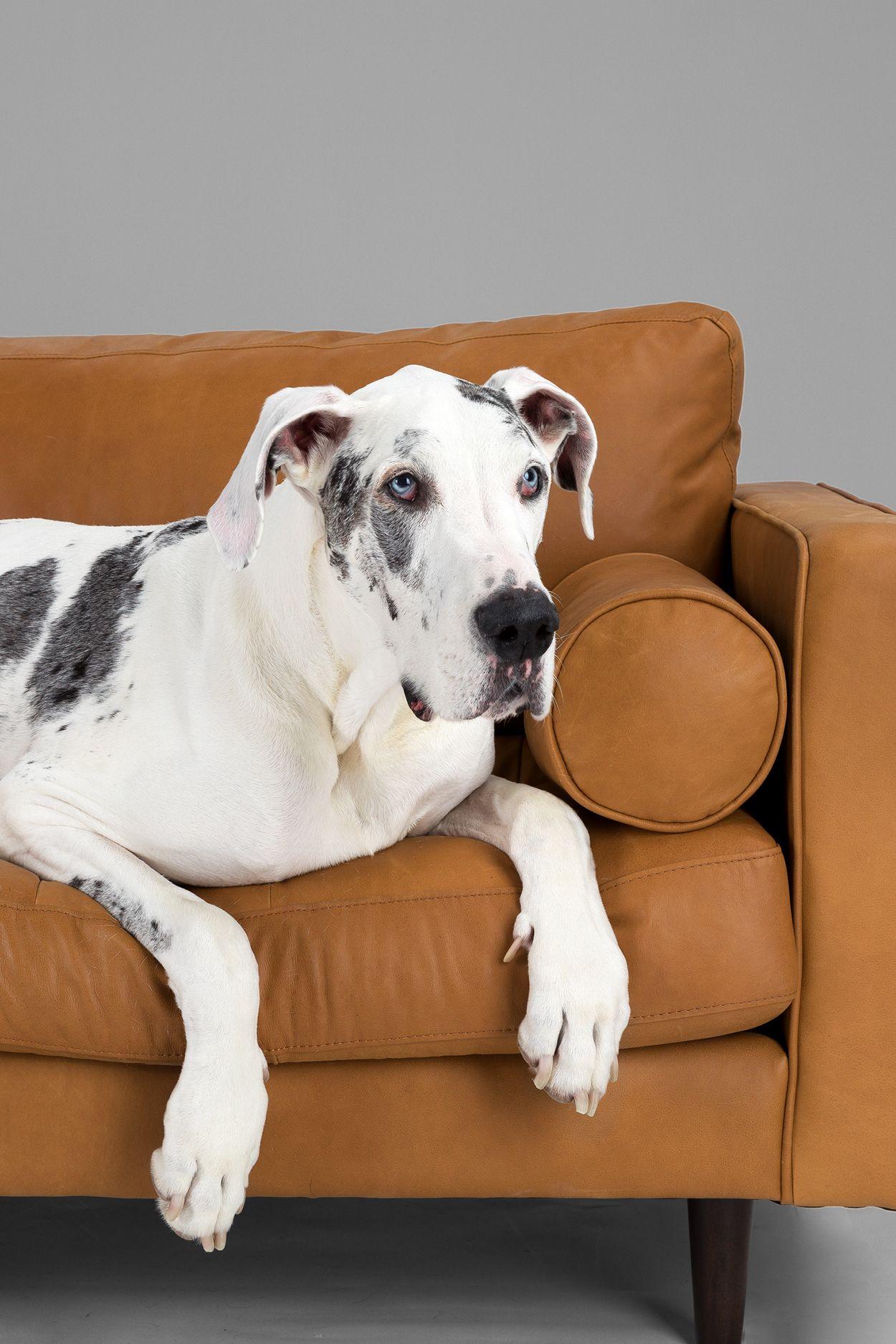 Groovy Sven Charme Tan Sofa Fuzzilcious Puppies Tan Leather Spiritservingveterans Wood Chair Design Ideas Spiritservingveteransorg