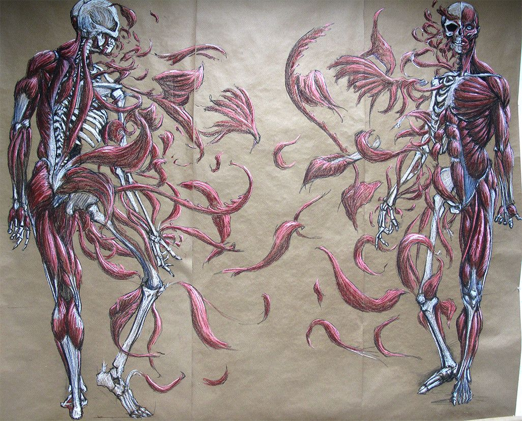 My Anatomy for the Artist midterm project | Anatomy, Artist and ...