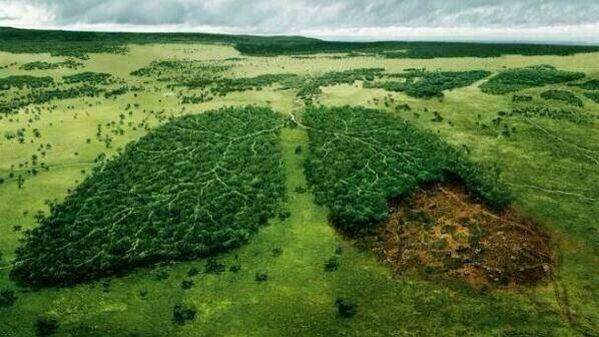 Cuidemos el Medio Ambiente, Los Árboles Son Nuestros Pulmones