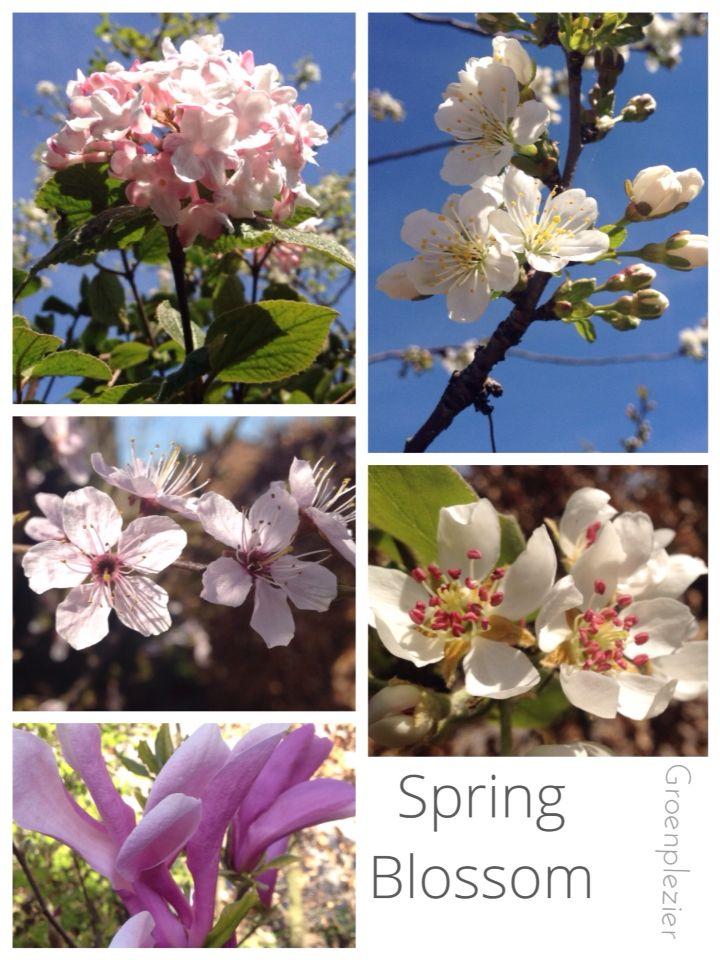 1e13f33e8e3 Lente = bloesemtijd Alles wordt weer groen, de tuin verandert in rap ...