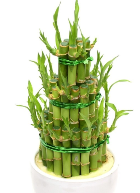 plante naturale pentru a crește pierderea în greutate 10 kilograme pierdere de grăsime