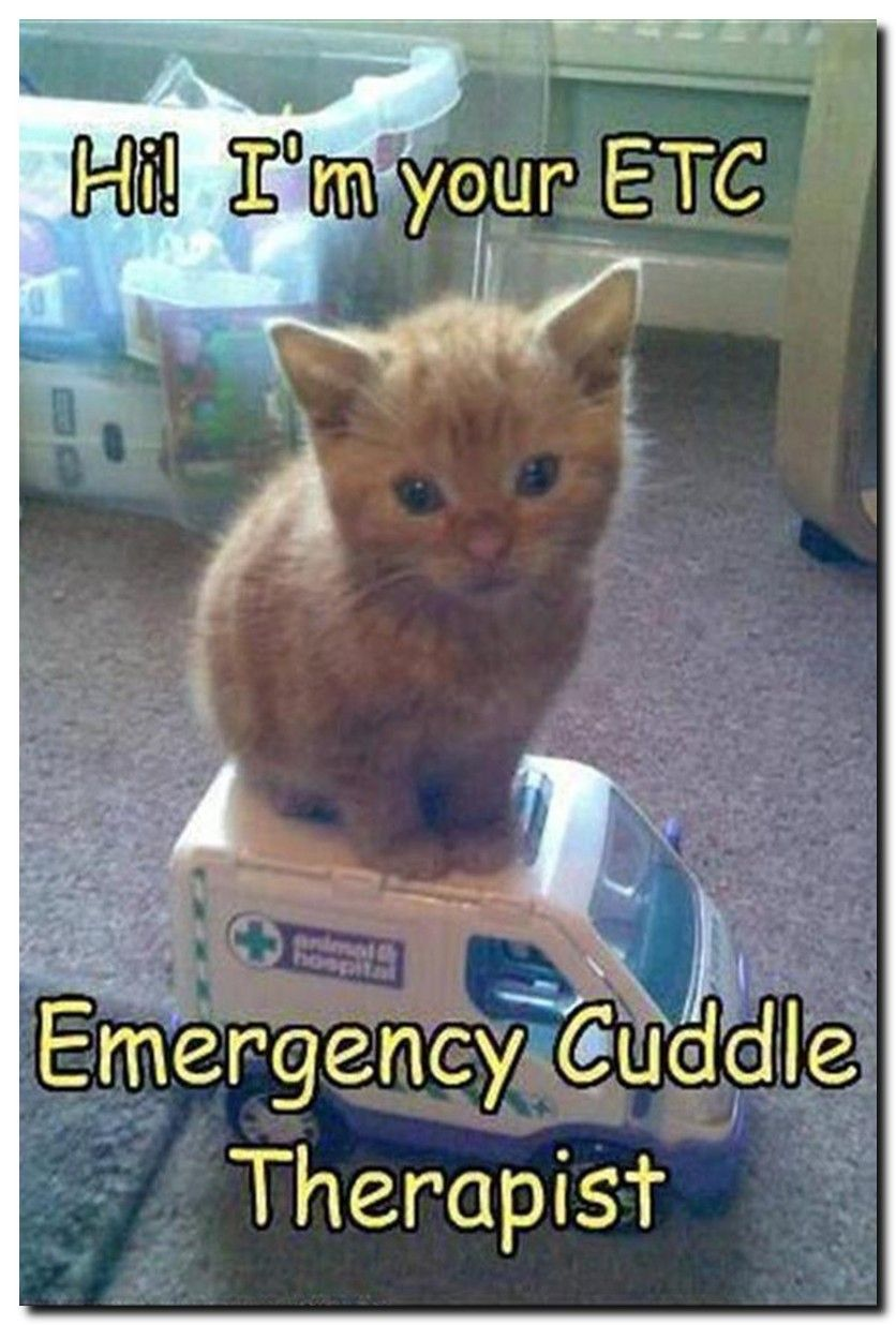 Fun Cat Facts For Kids See 60 New Funny Pictures With Animals On The Site Cat Beautiful Photography Memes Funny Animals Cute Funny Animals Cute Animals