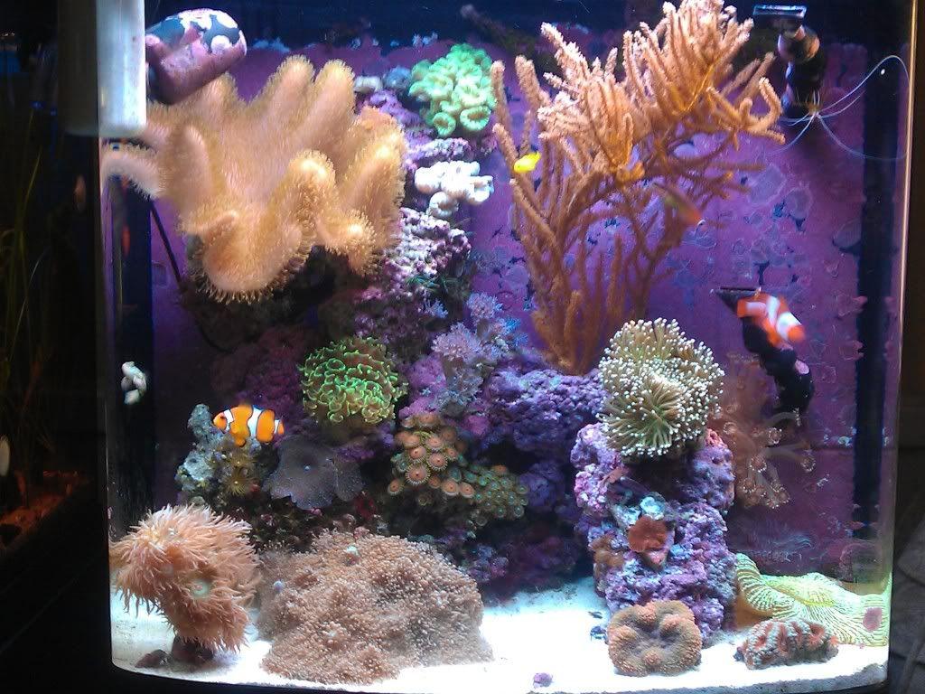 Posted Image Aquario Marinho Aquarios