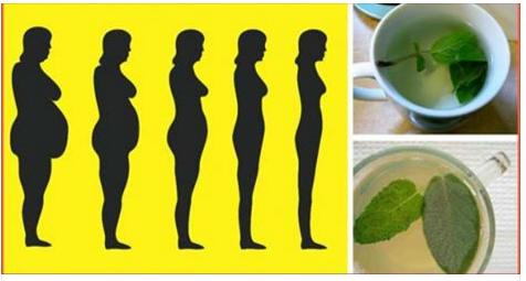 Si te la has pasado de dieta en dieta y no ves resultados, te damos ya la solución a tu problema con estas hierbas que aceleran el metabolismo