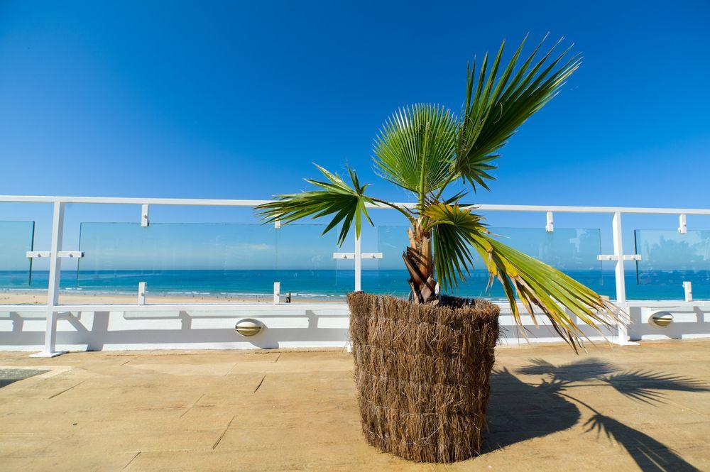 ratgeber palmen pflegen garten ratgeber pinterest palmen garten garten und palmen. Black Bedroom Furniture Sets. Home Design Ideas