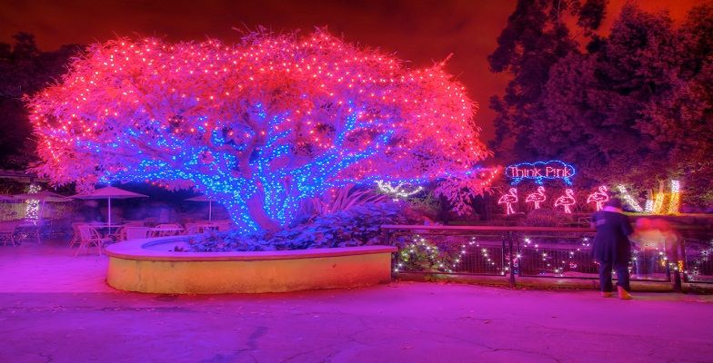 Zoolights At The Oakland Zoo Zoos Light Up The Holiday Season Minitime Com Zoo Lights California With Kids Holiday