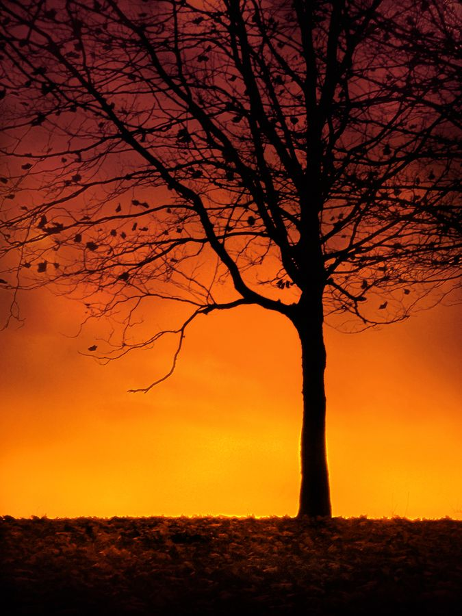 As the Sun Sets Over the Autumn Tree