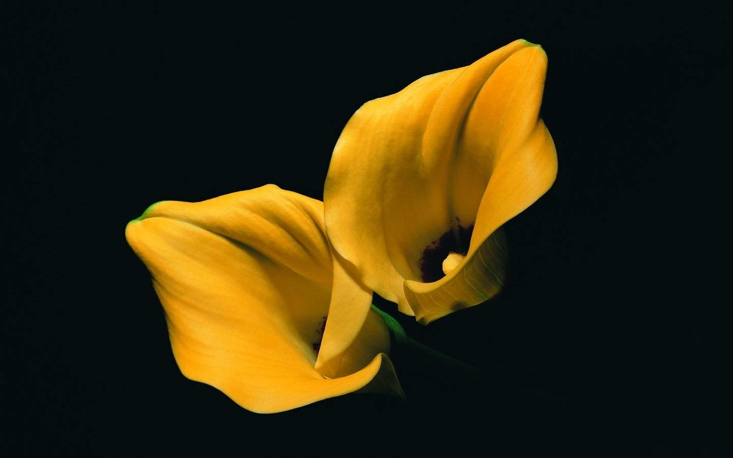 lilies, Yellow Flowers, Flowers, Black Background ...
