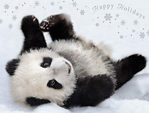 Posing panda happy holidays card all for Christmas pictures of baby animals