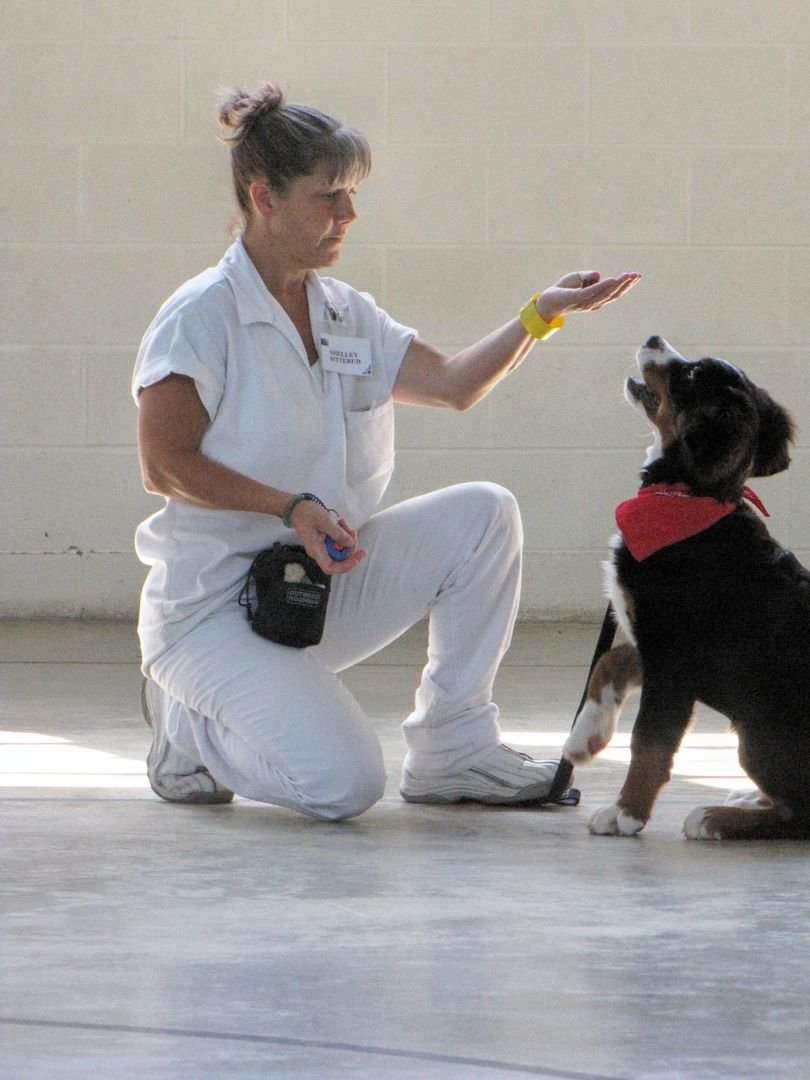 Prison Programs Inmates Giving Back Patriot Paws Service Dogs