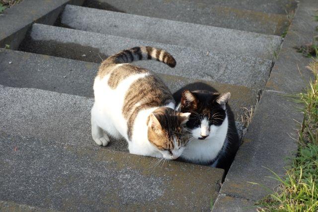 猫 ネコ ねこの日々   じぇいなすと、うちニャンズ+外猫いっぱい