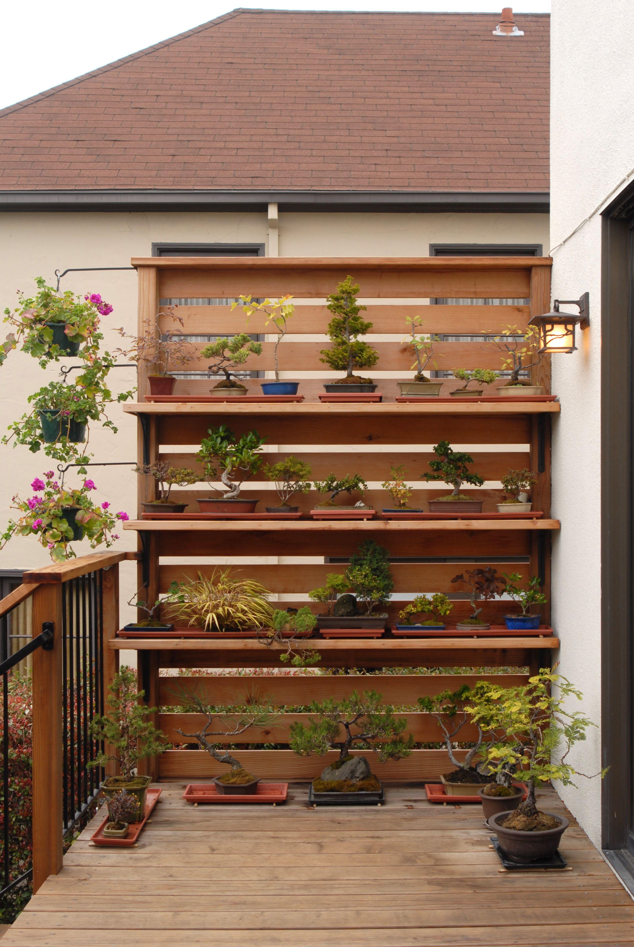 Bonsai By Canyon Design Build Oakland Ca Jardinagem Jardinagem