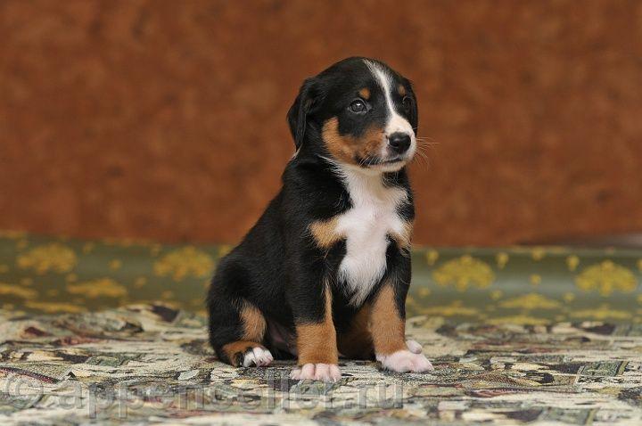 Pin van Robin Sumpter op Dogs Honden en Dieren