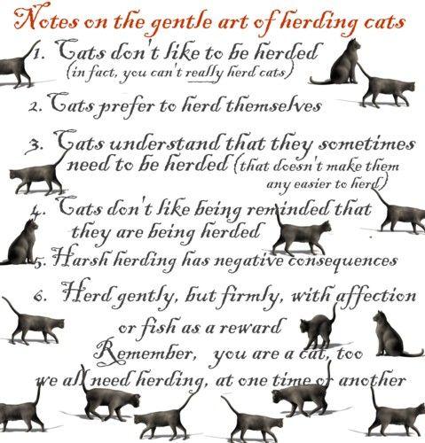 Herding Cats Herding Cats Warrior Cats Books Warrior Cats