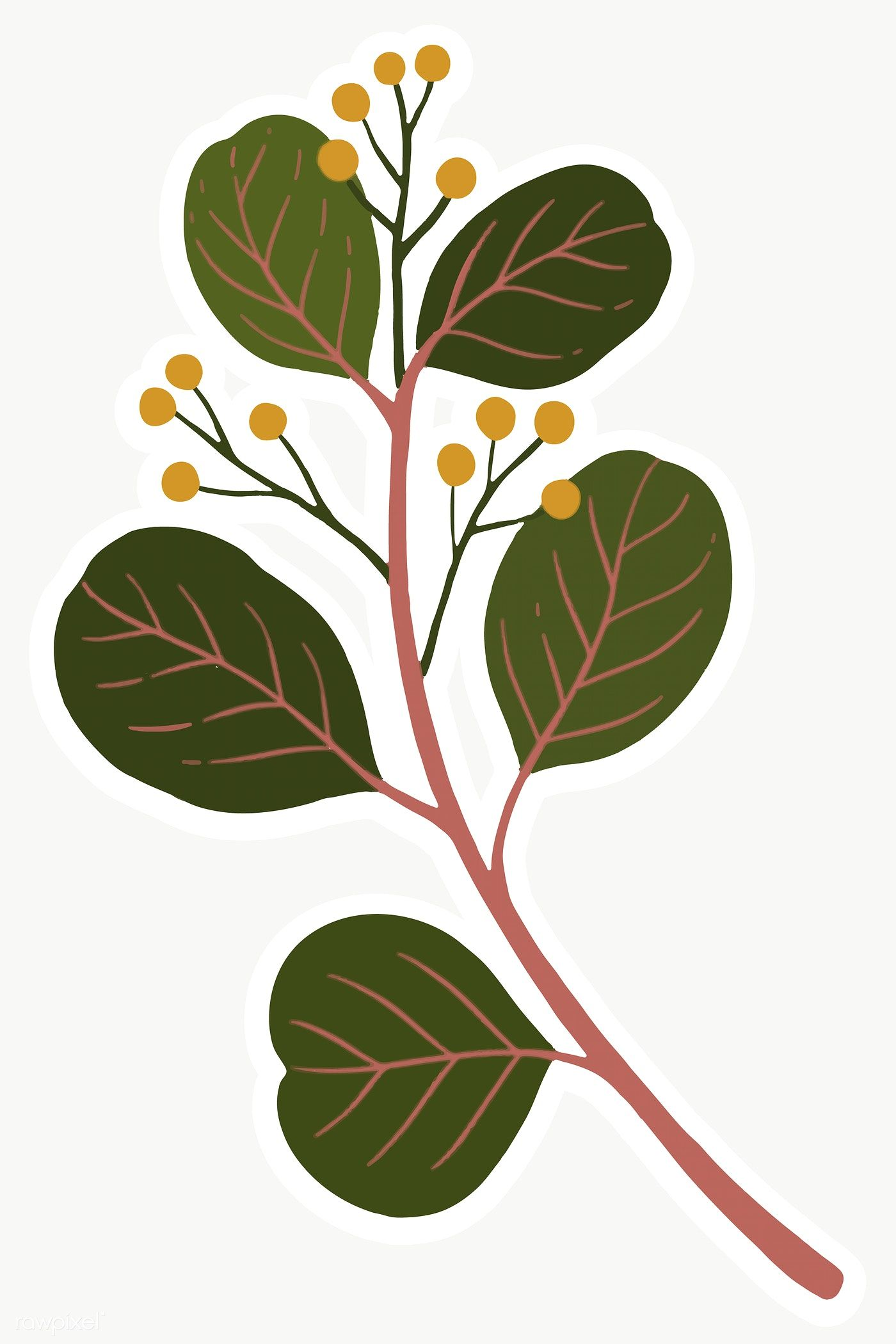 Download free png of Eucalyptus branch with seeds transparent png 2024066 -   18 planting Illustration paintings ideas