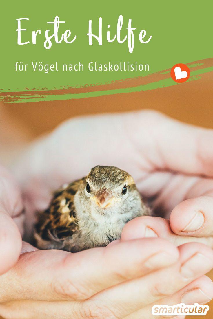 Vogel Gegen Die Scheibe Geflogen So Hilfst Du Ihm Sich Zu Erholen Tiere Und Haustiere Vogel Im Garten Igel Im Garten