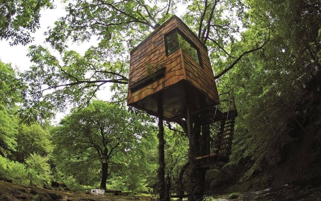 Nasu Tea Tree House   Sierra Magazine