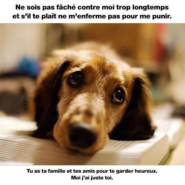 Bien connu chien-ami-heureux | MDR, Citation | Pinterest | Amis heureux  UF05