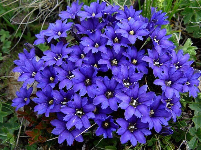 Цветы многолетники для сада — неприхотливые и ...