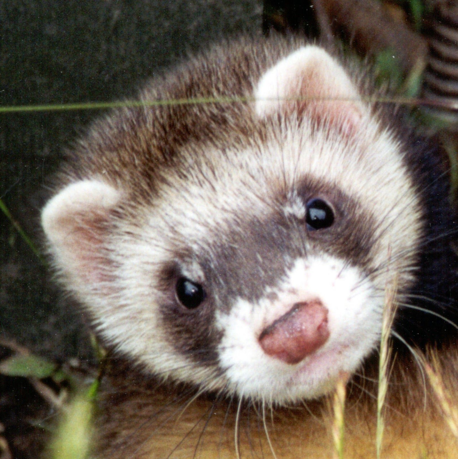 10 Remarkable Animals that Start with the Letter F
