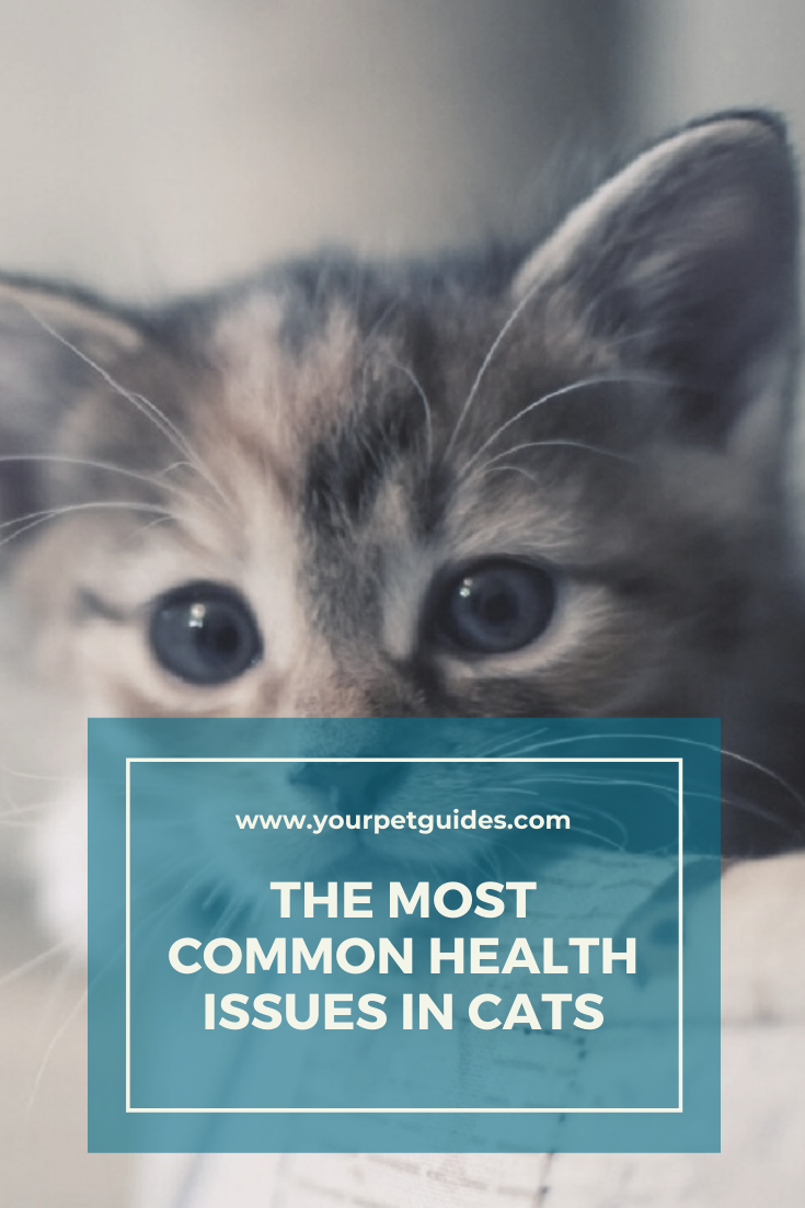 Common Cat Health Issues In 2020 Cat Health Problems Cat Health Kitten Health