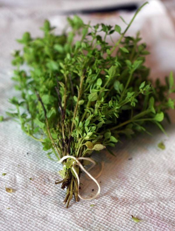Thyme - When using thyme as a protective curio to stop nightmares, burn it on charcoal and breathe the smoke. The best known use of thyme is in money drawing spells. Thyme is an ingredient in Three Jacks King Oil, used by Gamblers to draw money-luck. Many plant thyme in the garden, saying that as it grows, their money will increase.