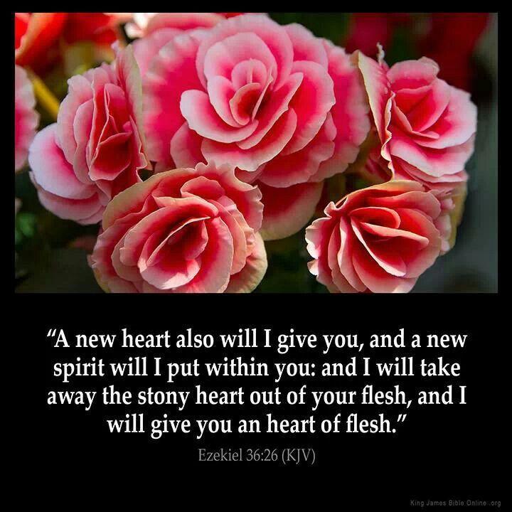 A new heart kjv king james bible verses bible verse