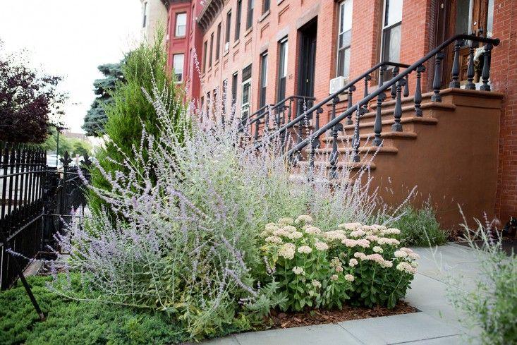 Autumn Sedum Fragrant Russian Sage And Blue Carpet Juniper - Urban front yard landscaping ideas