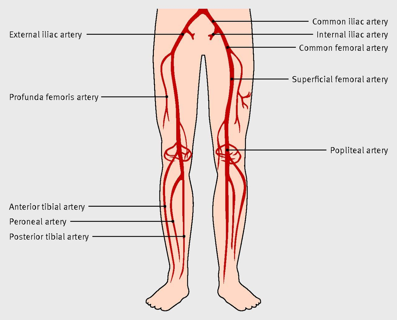 Arteries of the lower limb http://www.bmj.com/content/345/bmj.e5208 ...