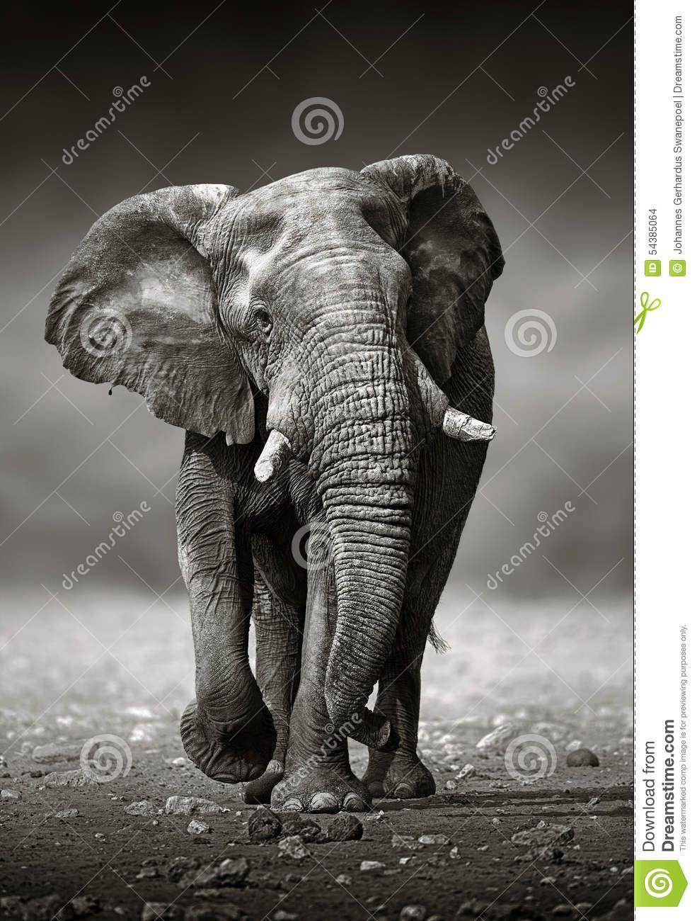 Resultado de imagen para elefante | diseño | Pinterest | Elefantes ...