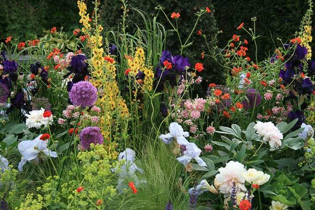 Chelsea Flower Show 2010: Chelsea Star Plants Competition   Part One. Victorian  GardensThe ...