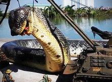 Egyptian Giant Snake Killed In Red Sea With Images Giant Snake