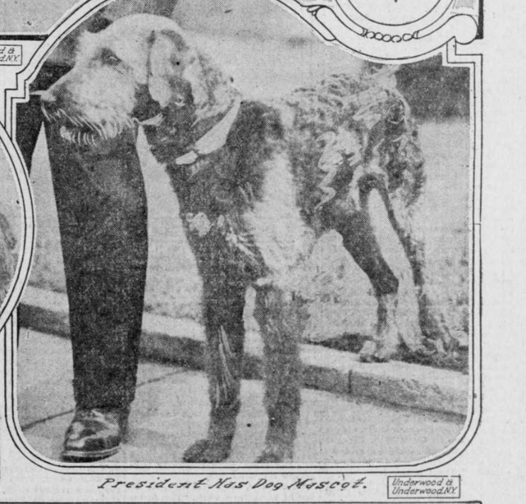 Caswell Laddie Boy c. 1922