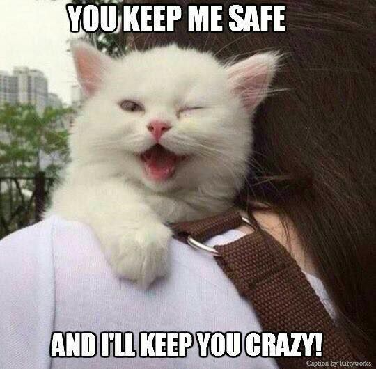 70 Most Hilarious White Cat Meme Funny White Cat Images White Cat Meme Cat Memes Cats