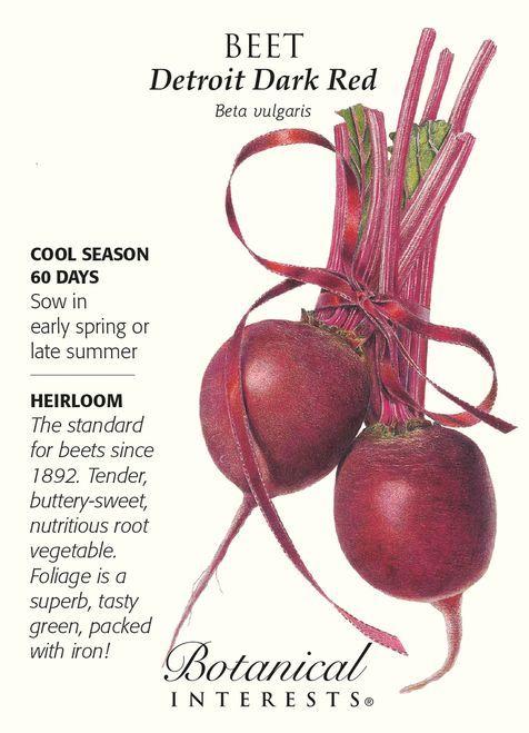 Detroit Dark Red Beet Seeds 4 Grams Botanical Interests Red Beets Beet Seeds Beets
