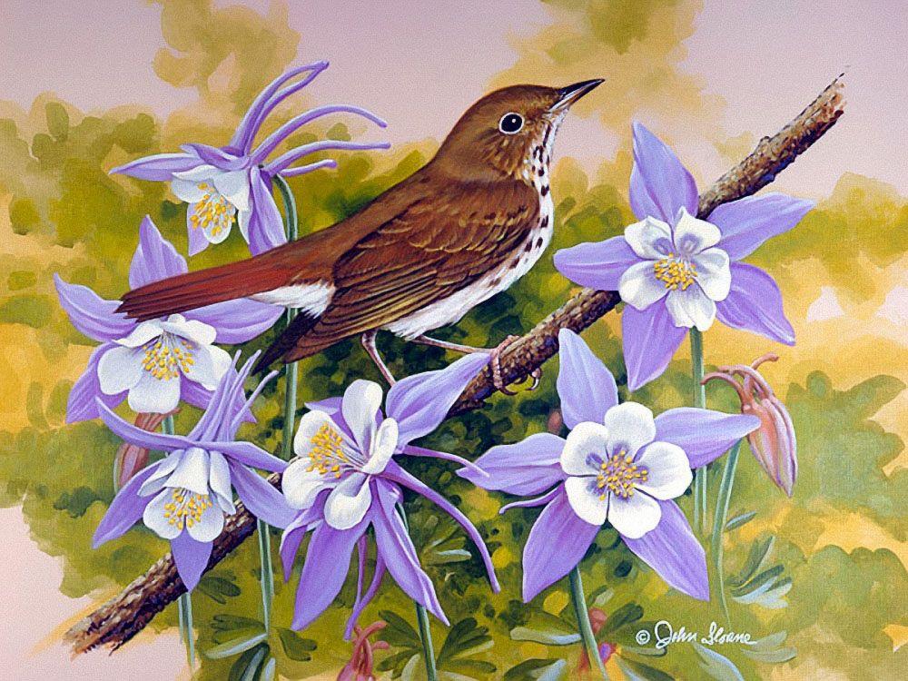 мебель рисунки красивых птиц на цветах работает мировым судьей
