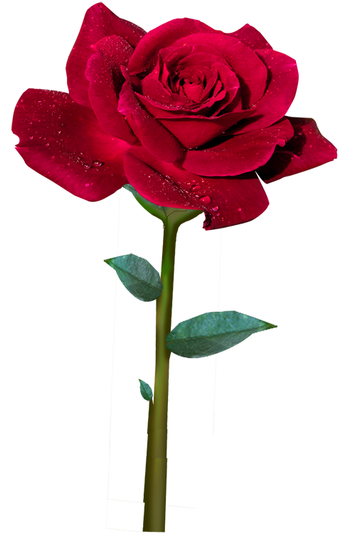 ℒ𝓪 ℛ𝓸𝓼𝓪 ℛ𝓸𝓳𝓪 Roses Pinterest Red Roses Flowers And Rose