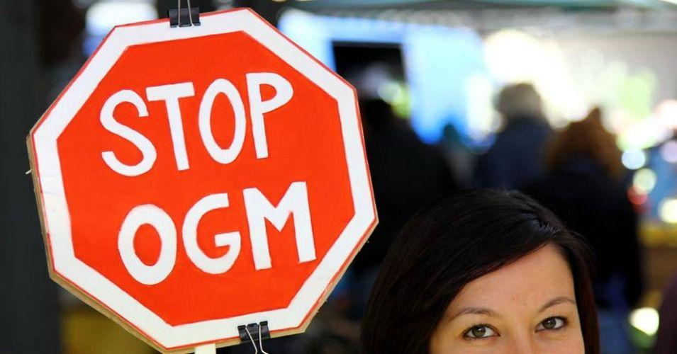 Approval of GMO Imports Moves EU 'Closer to Monsanto' | Common Dreams | Breaking News & Views for the Progressive Community