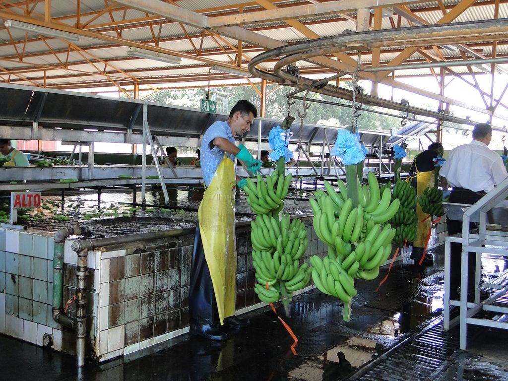 Production factory vegetables