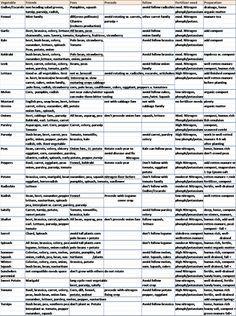 Endive to turnip companion chart | Companion planting ... Turnip Companion Plants