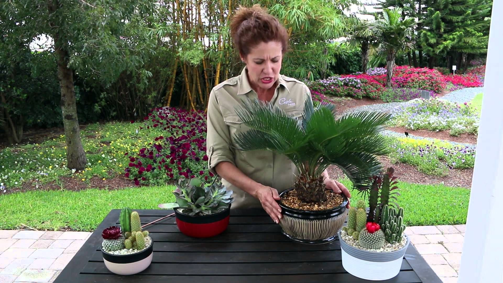 Get tips for watering houseplants that have gluedon rock